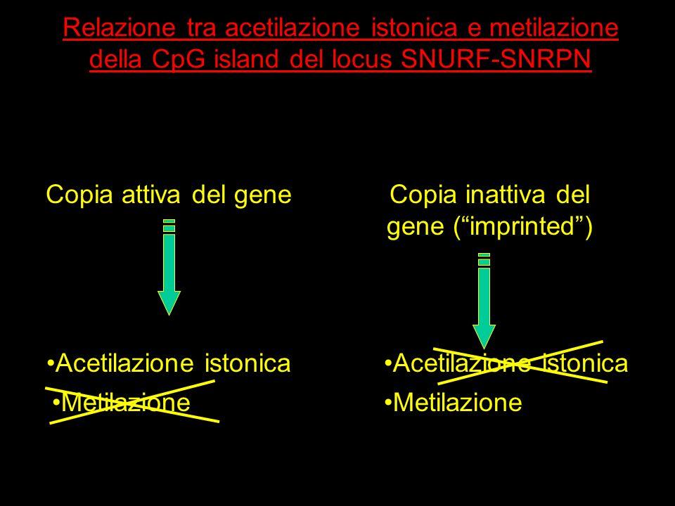 Copia inattiva del gene ( imprinted )