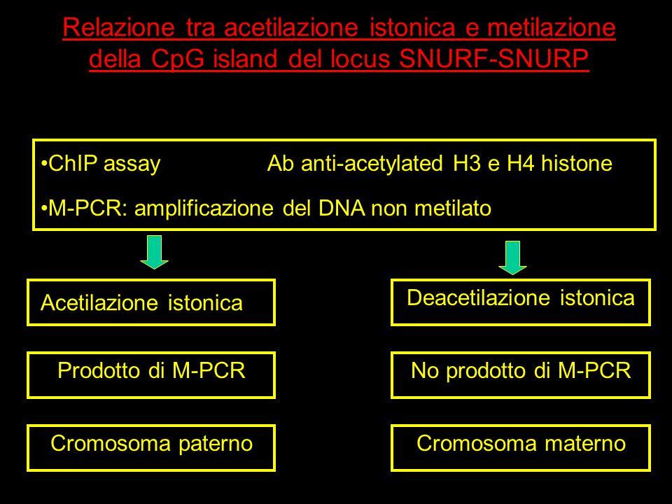 Relazione tra acetilazione istonica e metilazione della CpG island del locus SNURF-SNURP