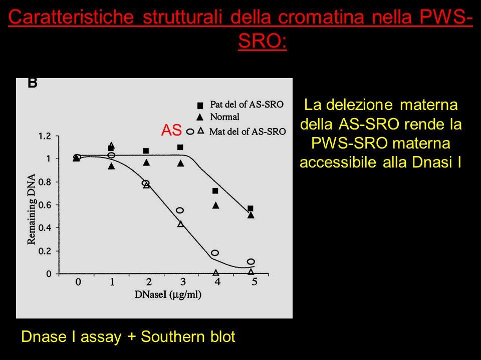 Caratteristiche strutturali della cromatina nella PWS-SRO: