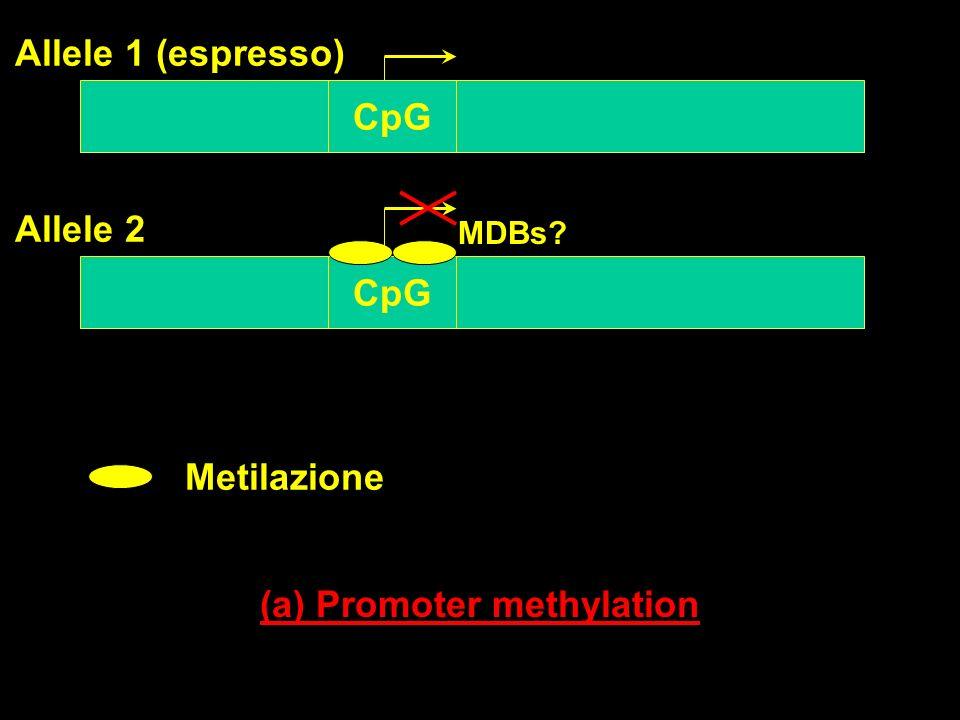(a) Promoter methylation