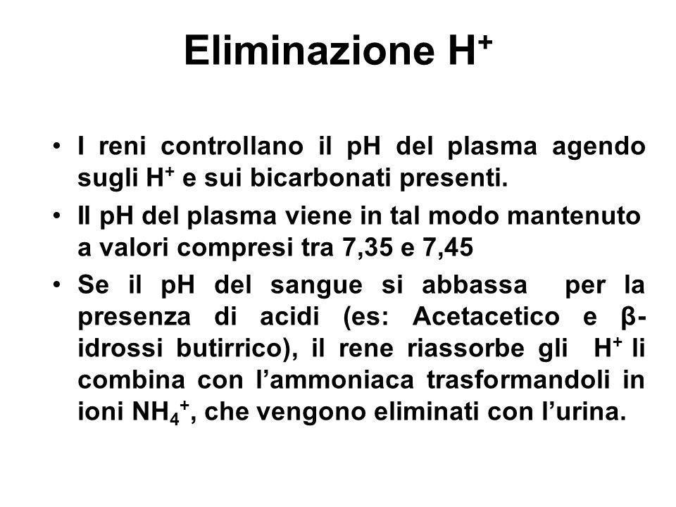 Eliminazione H+I reni controllano il pH del plasma agendo sugli H+ e sui bicarbonati presenti.