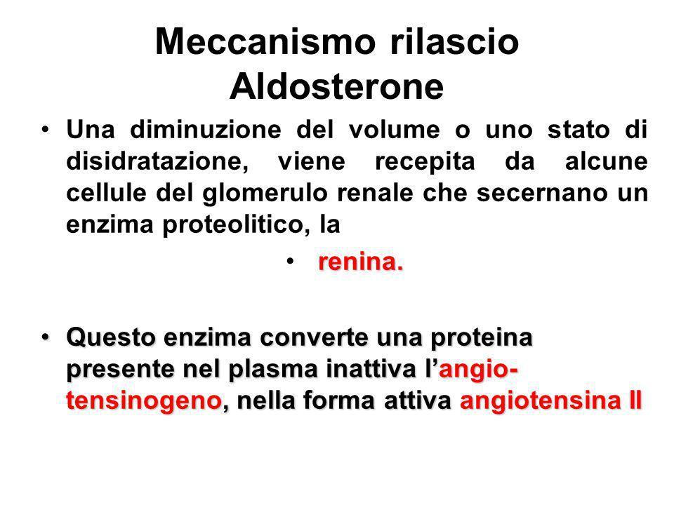 Meccanismo rilascio Aldosterone