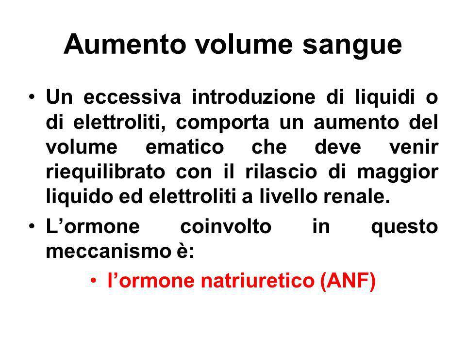 l'ormone natriuretico (ANF)