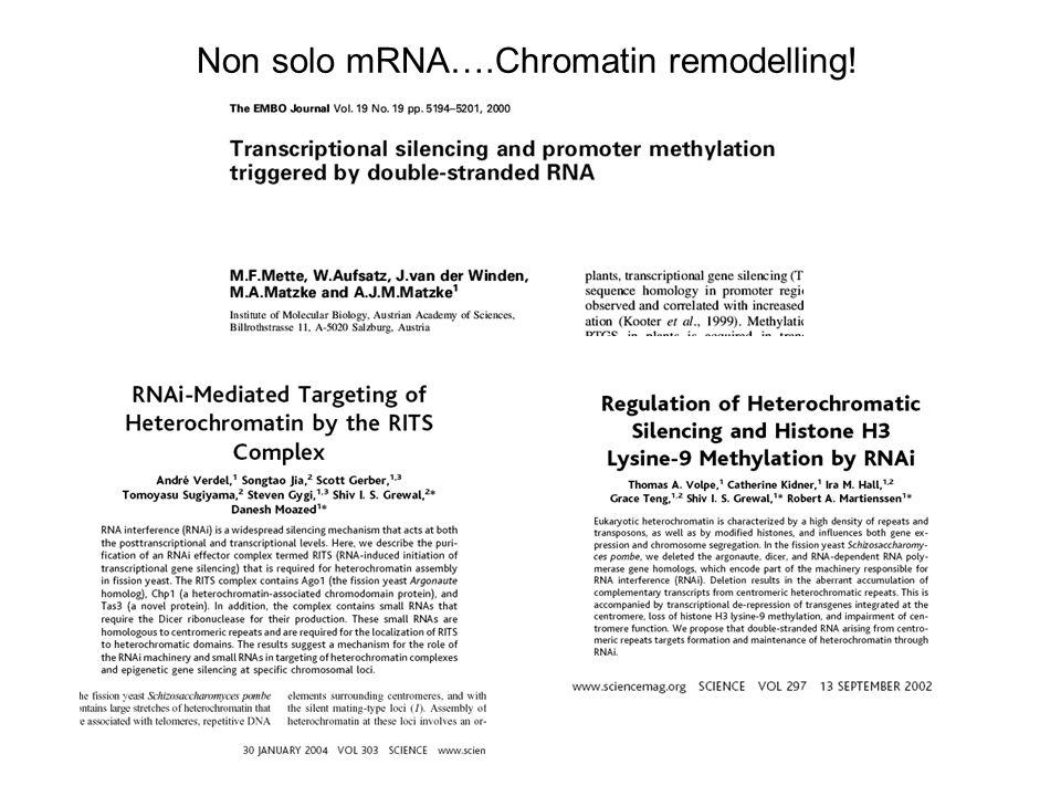Non solo mRNA….Chromatin remodelling!