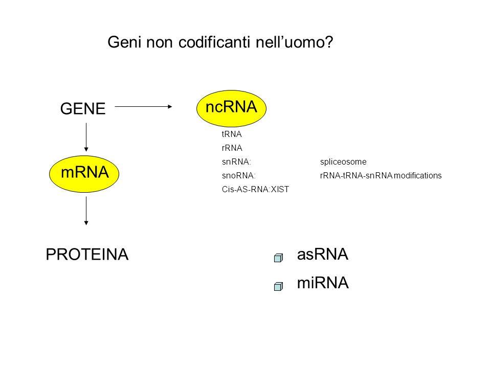 Geni non codificanti nell'uomo
