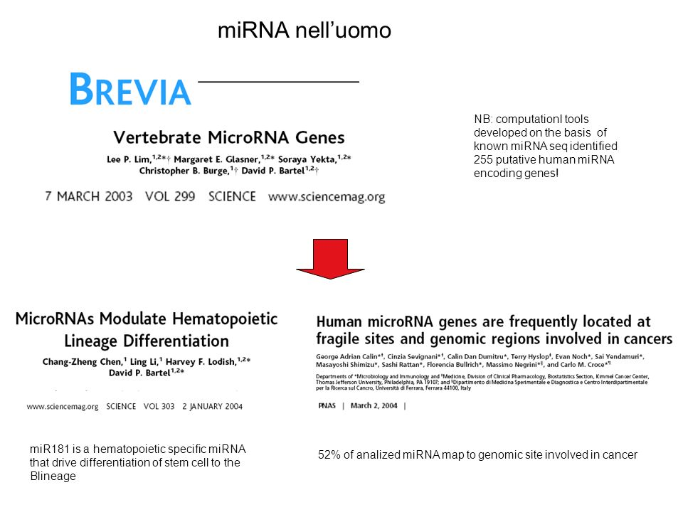 miRNA nell'uomo NB: computationl tools developed on the basis of known miRNA seq identified 255 putative human miRNA encoding genes!