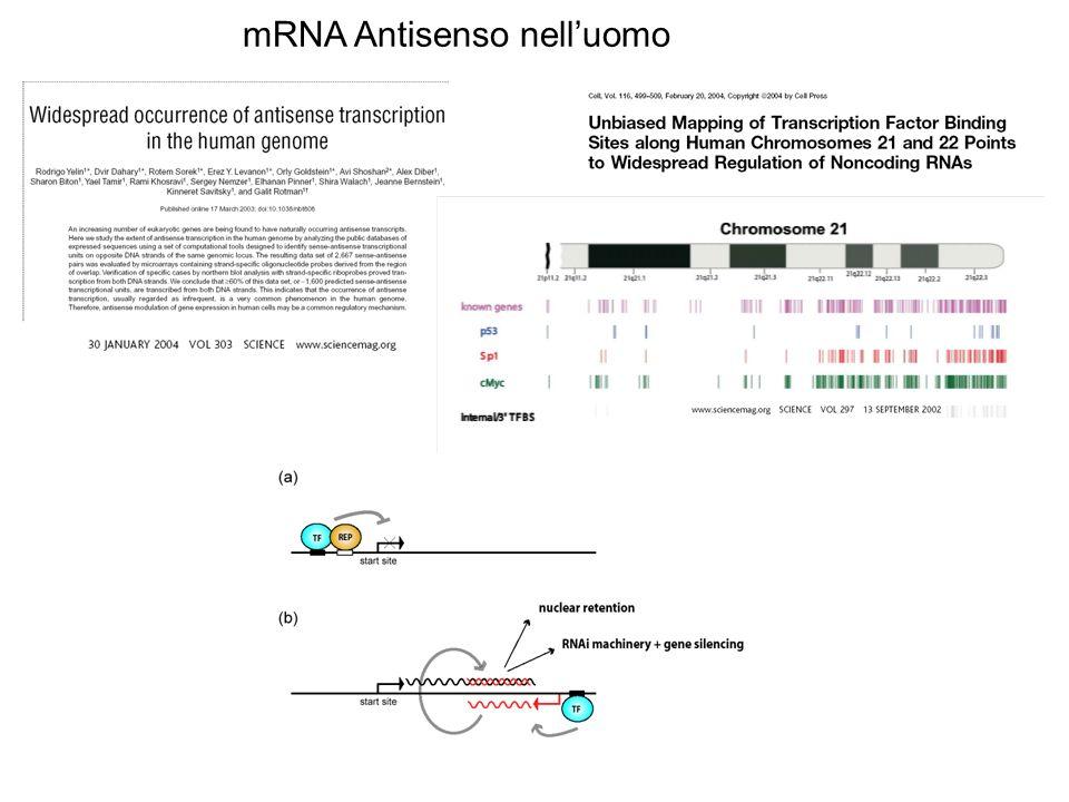 mRNA Antisenso nell'uomo