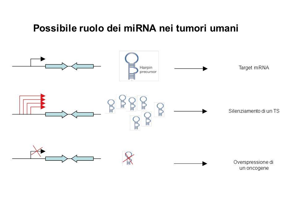 Possibile ruolo dei miRNA nei tumori umani