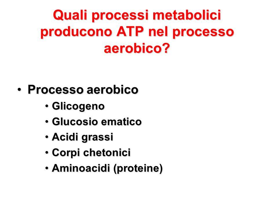 Quali processi metabolici producono ATP nel processo aerobico