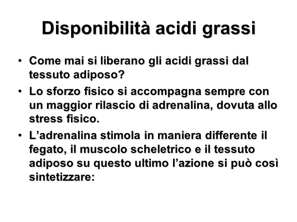 Disponibilità acidi grassi