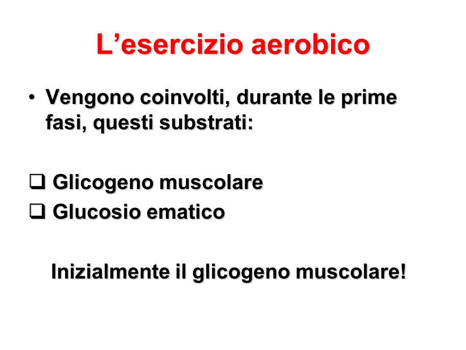 L'esercizio aerobico Vengono coinvolti, durante le prime fasi, questi substrati: Glicogeno muscolare.