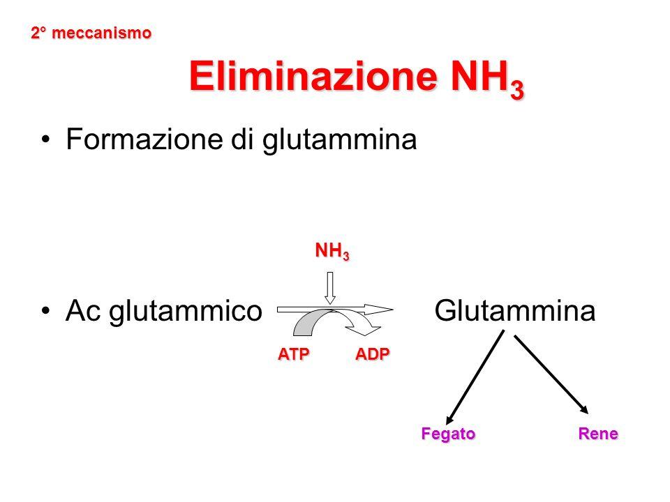 Eliminazione NH3 Formazione di glutammina Ac glutammico Glutammina NH3