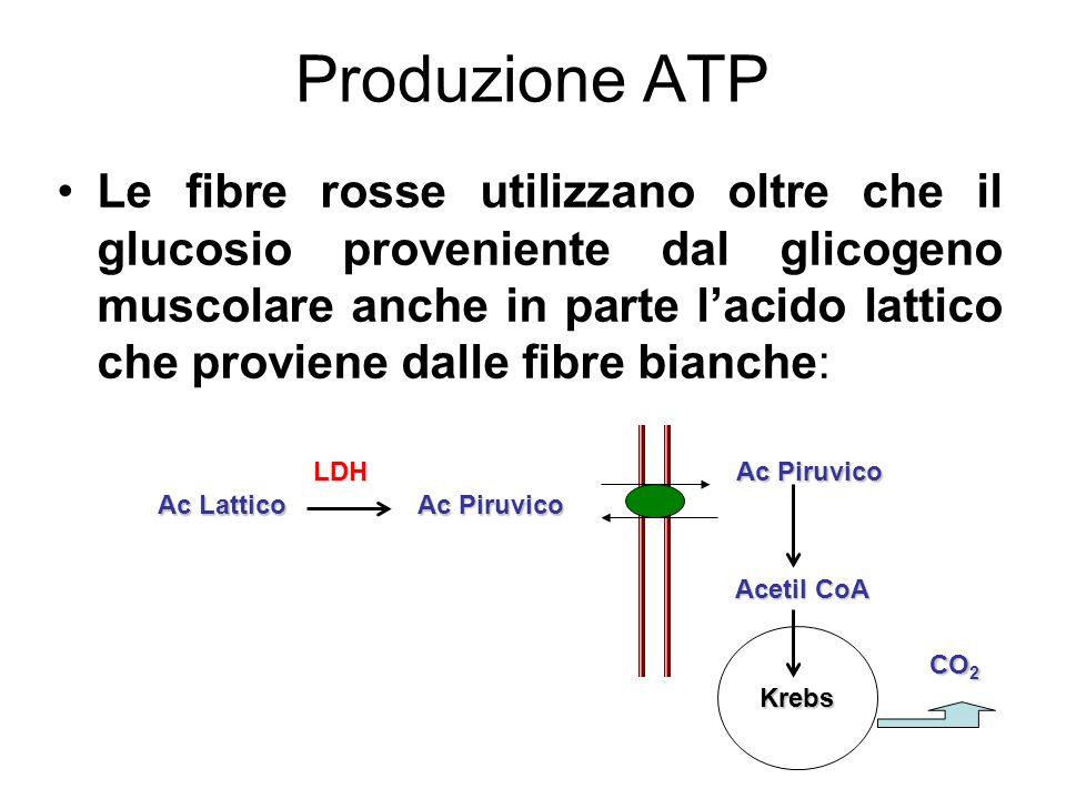 Produzione ATP