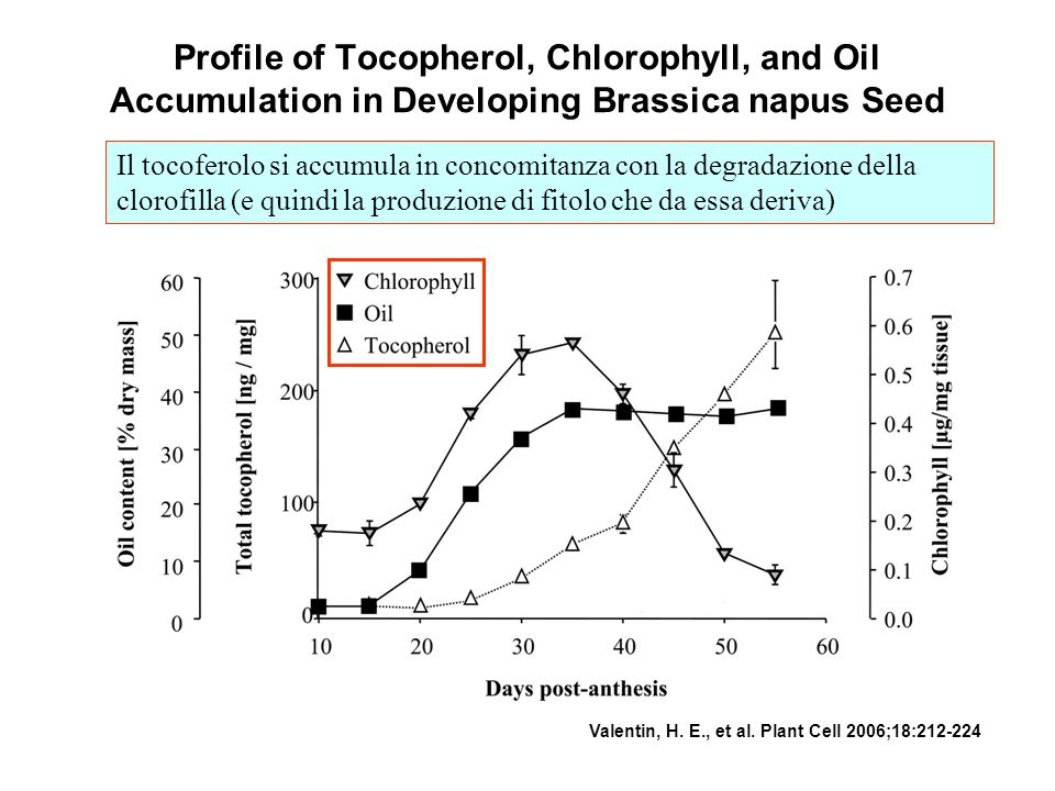 Profile of Tocopherol, Chlorophyll, and Oil Accumulation in Developing Brassica napus Seed