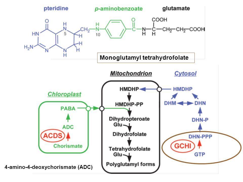 Monoglutamyl tetrahydrofolate