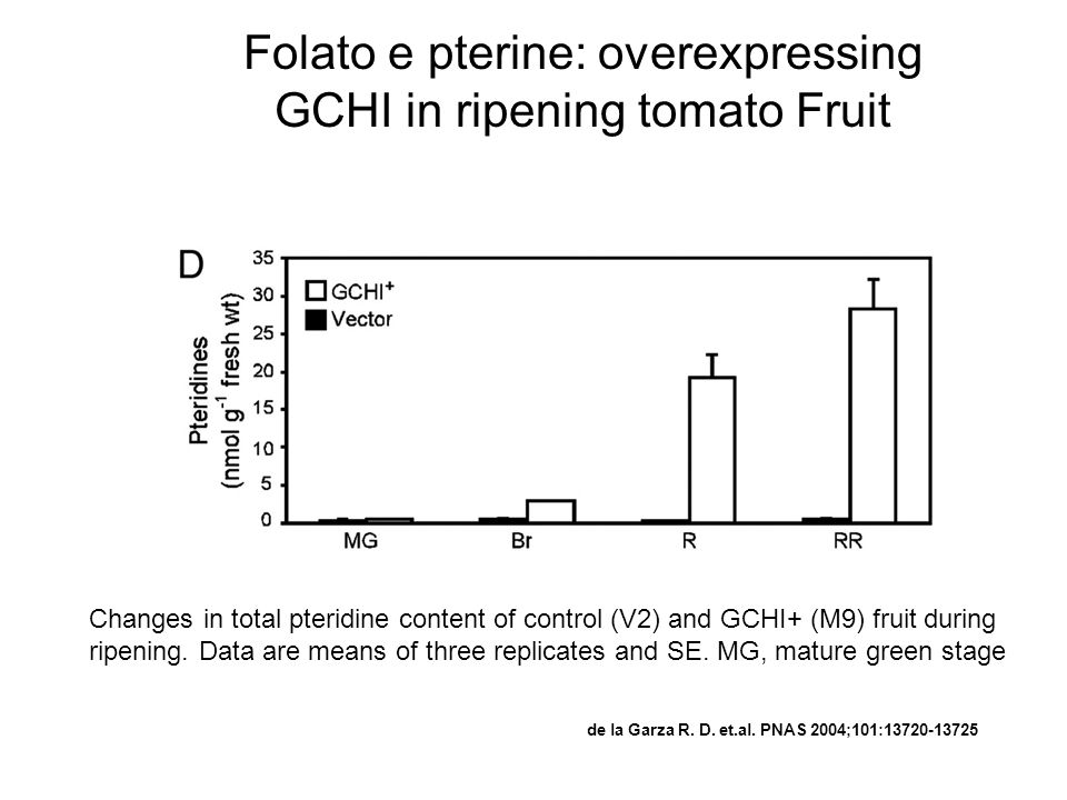 Folato e pterine: overexpressing GCHI in ripening tomato Fruit