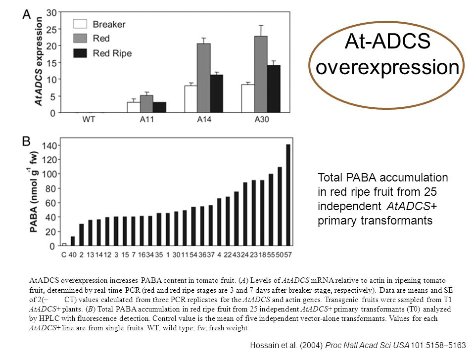 At-ADCS overexpression