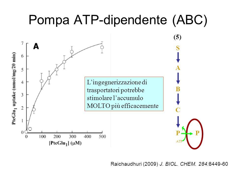 Pompa ATP-dipendente (ABC)