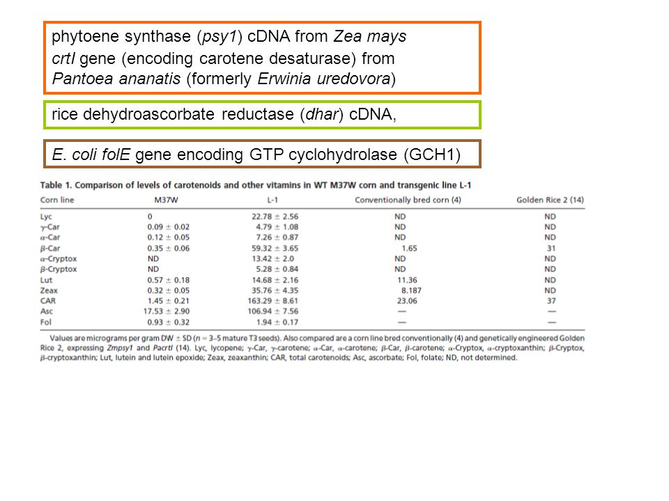 phytoene synthase (psy1) cDNA from Zea mays