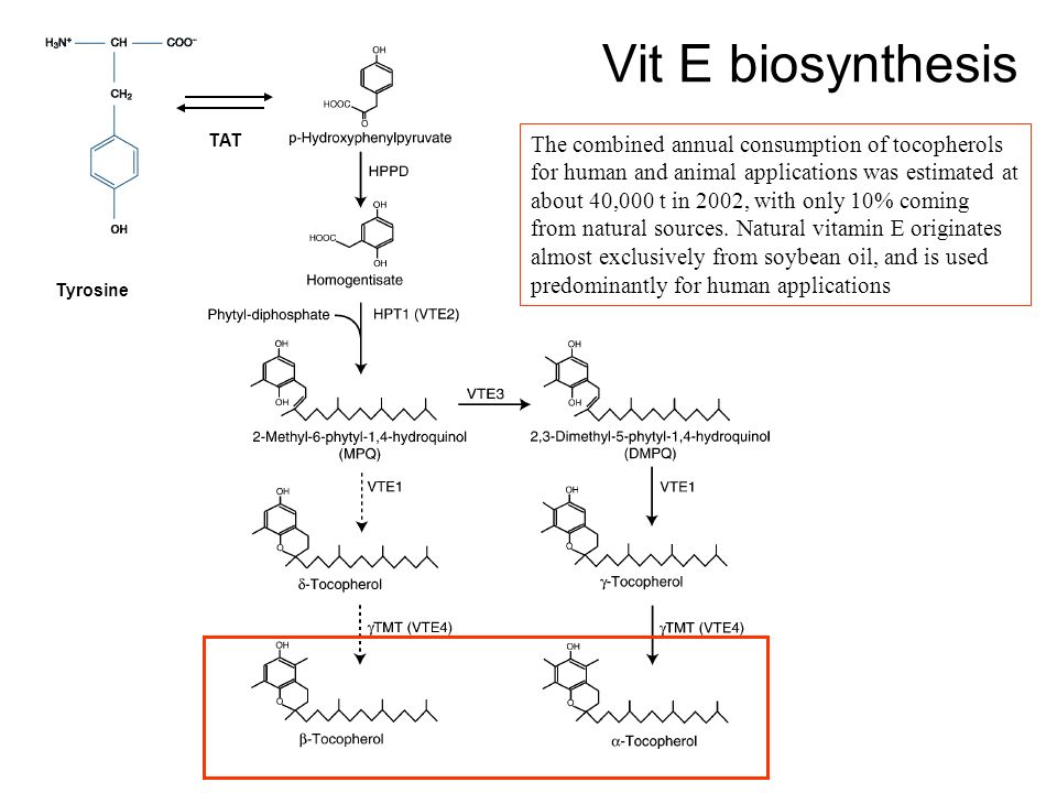 Vit E biosynthesis TAT.