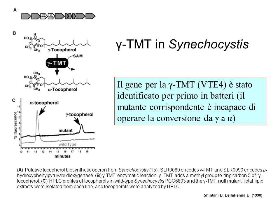 γ-TMT in Synechocystis