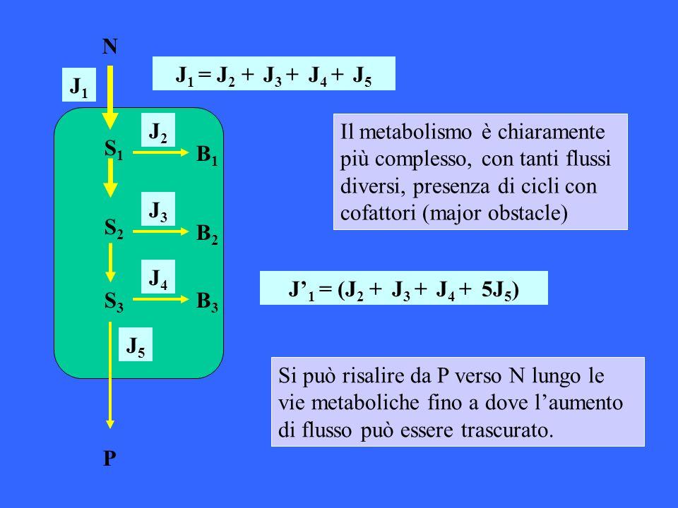 N P. S1. B1. S3. S2. B2. B3. J1 = J2 + J3 + J4 + J5. J1. J2.