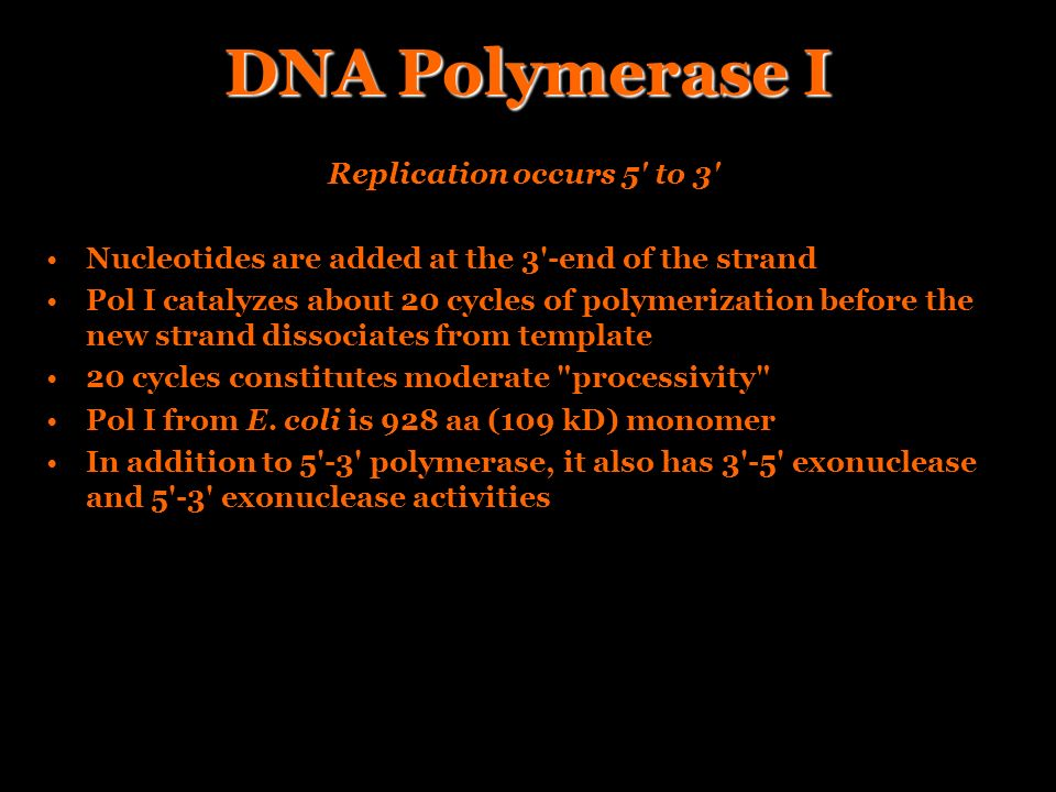 DNA Polymerase I Replication occurs 5 to 3