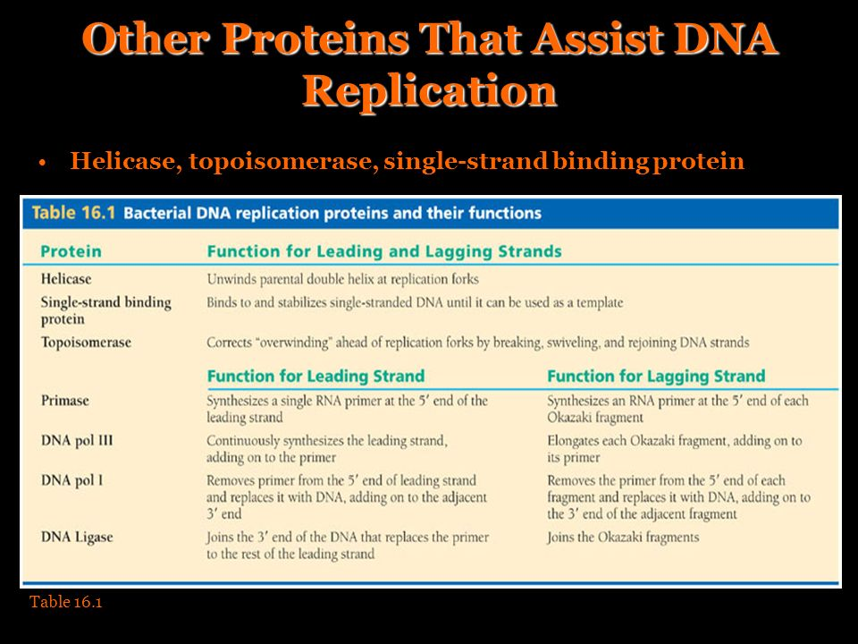 Other Proteins That Assist DNA Replication