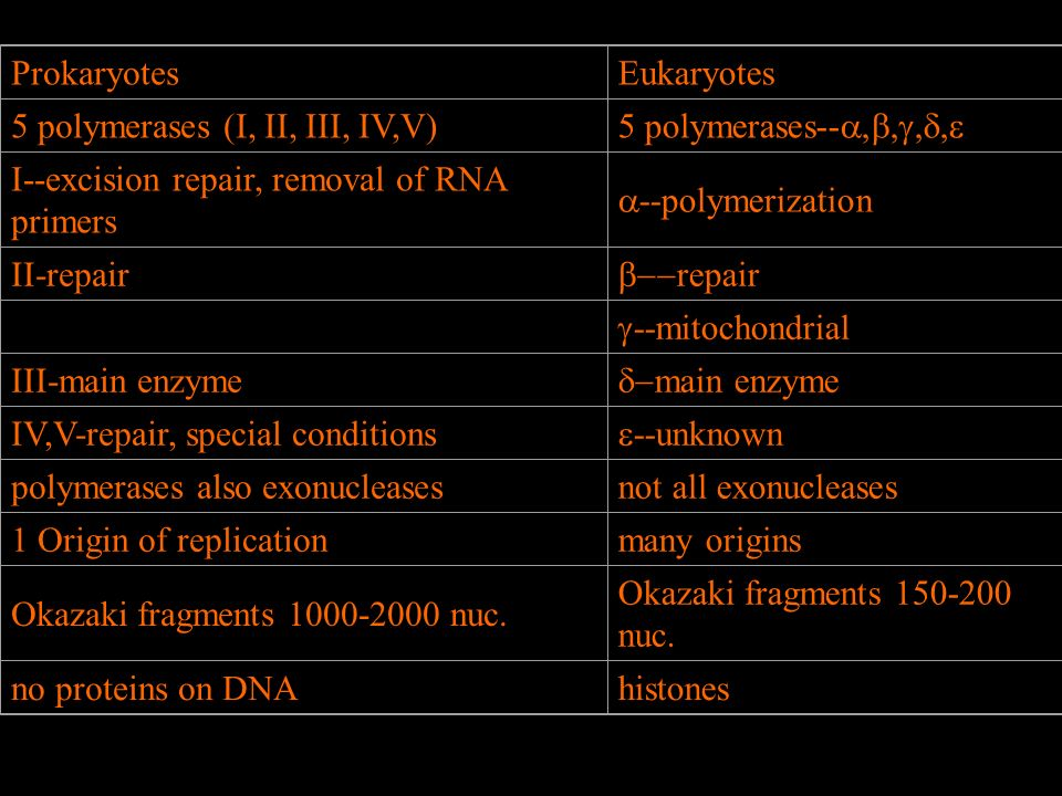 Prokaryotes Eukaryotes. 5 polymerases (I, II, III, IV,V) 5 polymerases--a,b,g,d,e. I--excision repair, removal of RNA primers