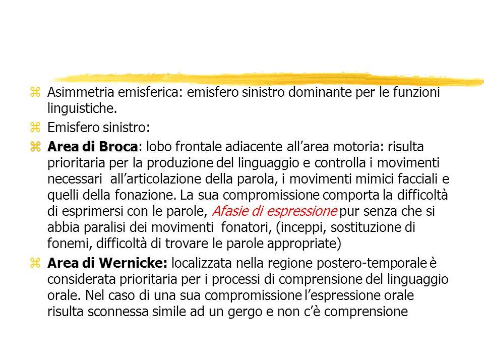 Asimmetria emisferica: emisfero sinistro dominante per le funzioni linguistiche.