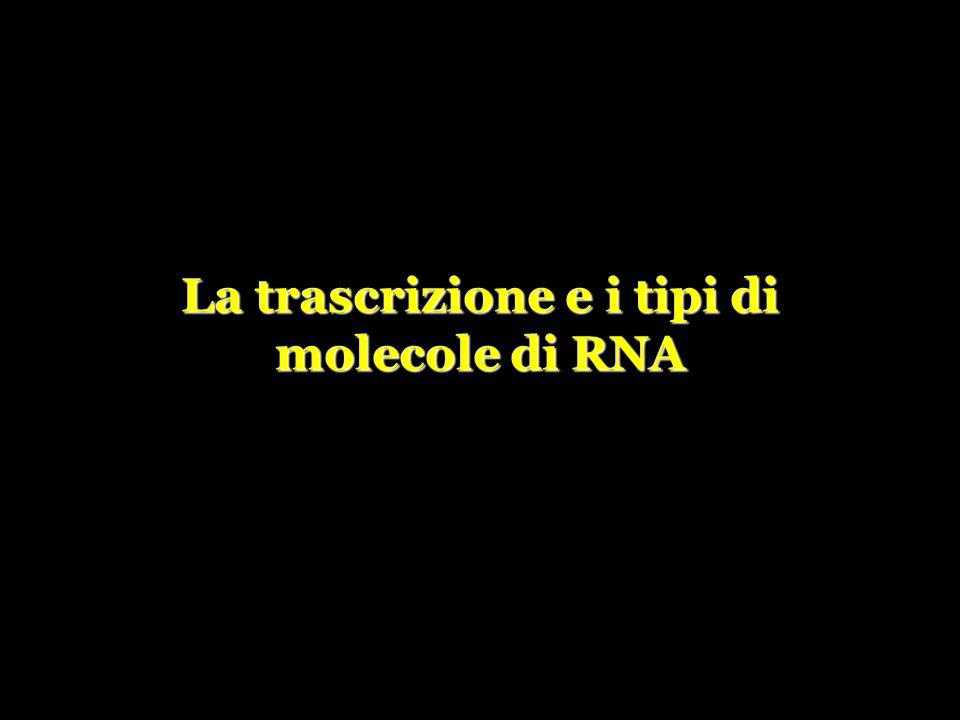 La trascrizione e i tipi di molecole di RNA