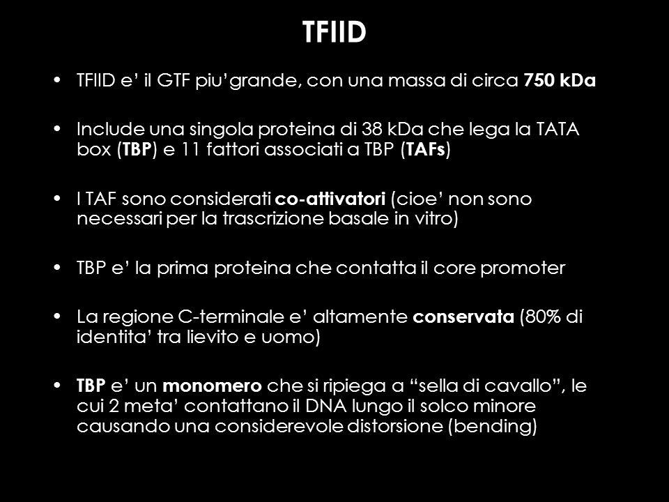 TFIID TFIID e' il GTF piu'grande, con una massa di circa 750 kDa