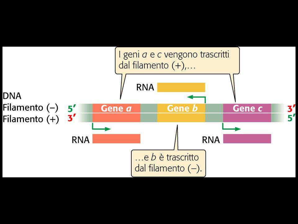 Pierce, GENETICA, Zanichelli editore S.p.A. Copyright © 2005