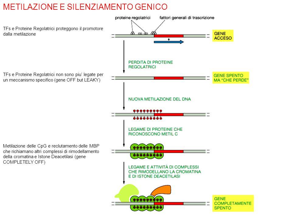 METILAZIONE E SILENZIAMENTO GENICO