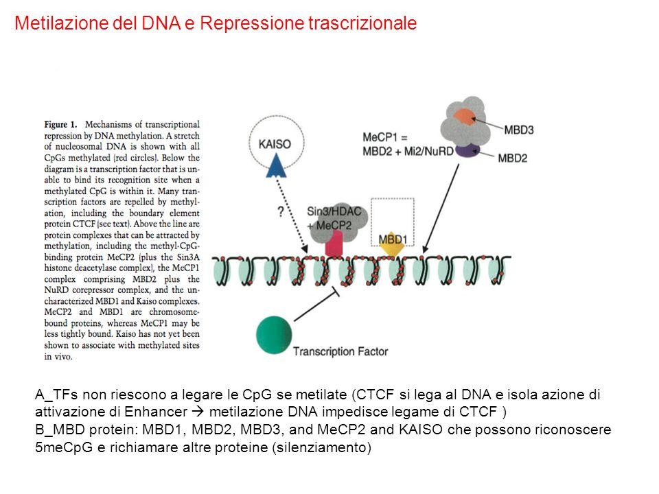 Metilazione del DNA e Repressione trascrizionale