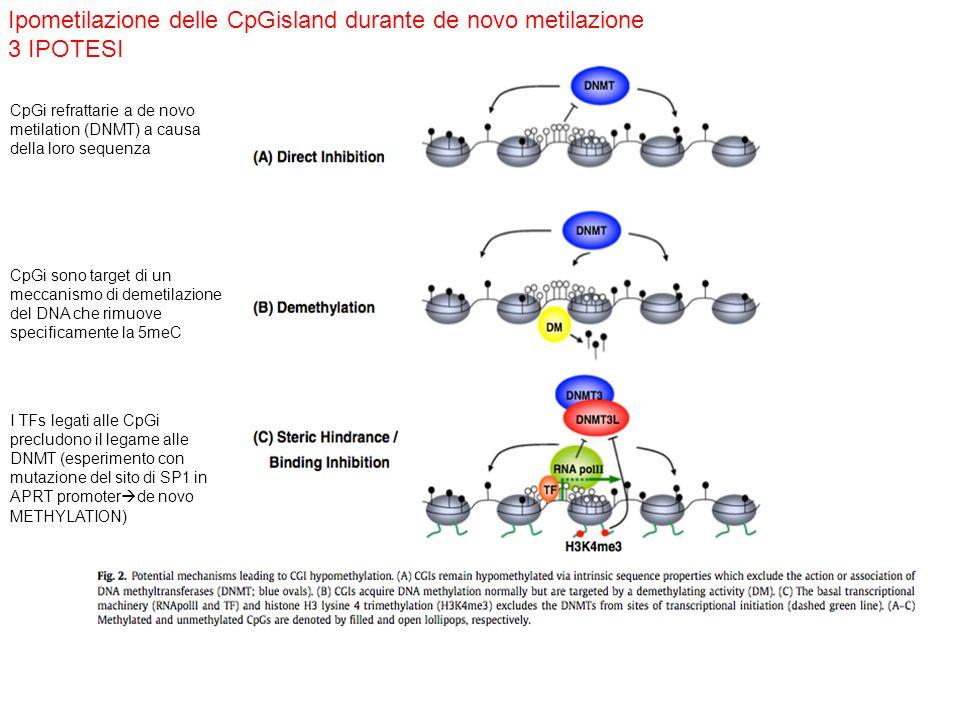 Ipometilazione delle CpGisland durante de novo metilazione 3 IPOTESI
