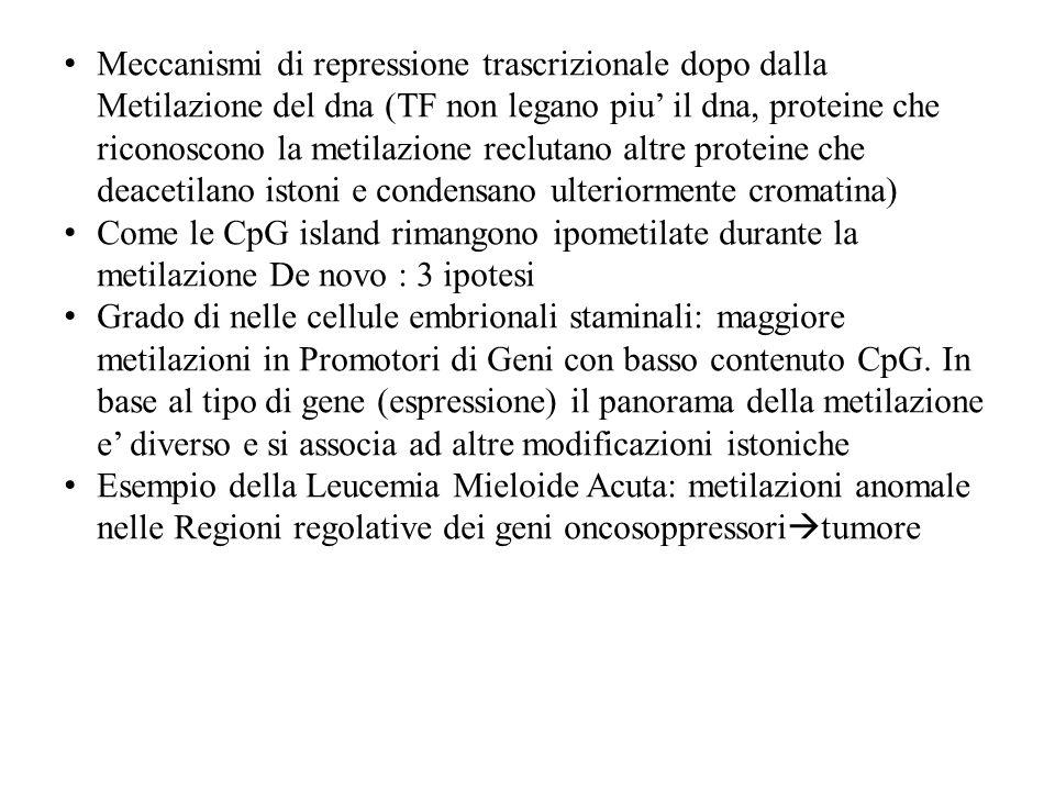 Meccanismi di repressione trascrizionale dopo dalla Metilazione del dna (TF non legano piu' il dna, proteine che riconoscono la metilazione reclutano altre proteine che deacetilano istoni e condensano ulteriormente cromatina)