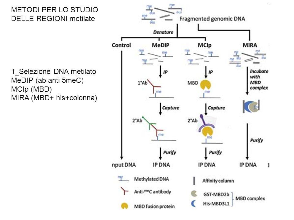 METODI PER LO STUDIO DELLE REGIONI metilate