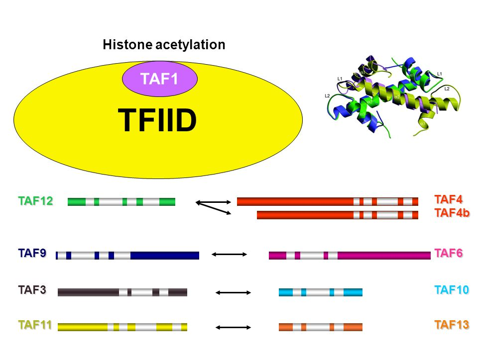 TFIID TAF1 Histone acetylation TAF12 TAF4 TAF4b TAF9 TAF6 TAF3 TAF10