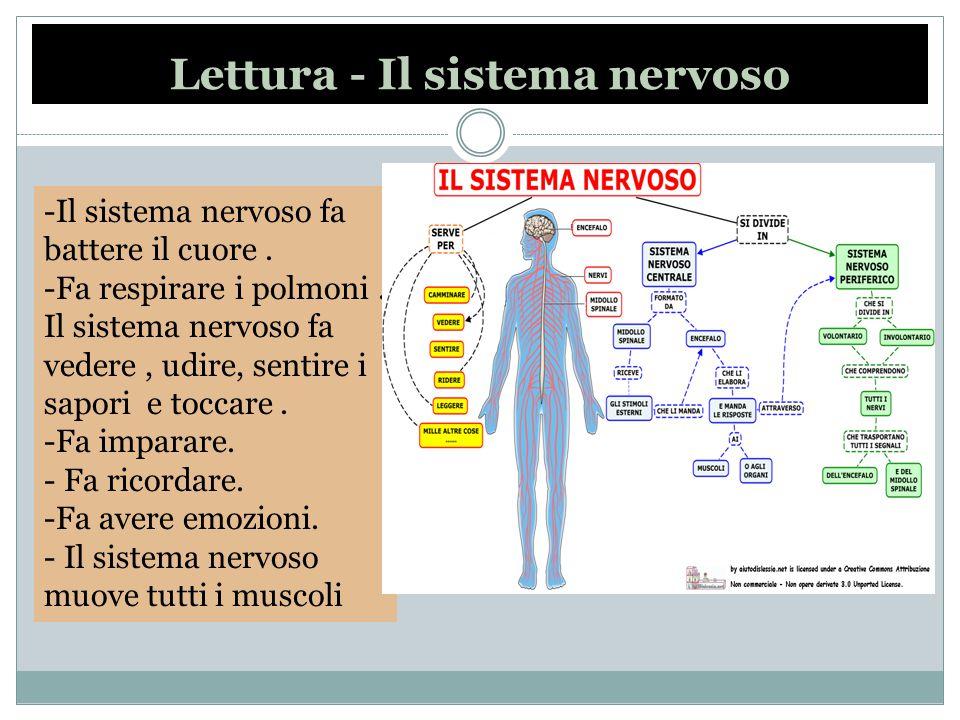 Lettura - Il sistema nervoso
