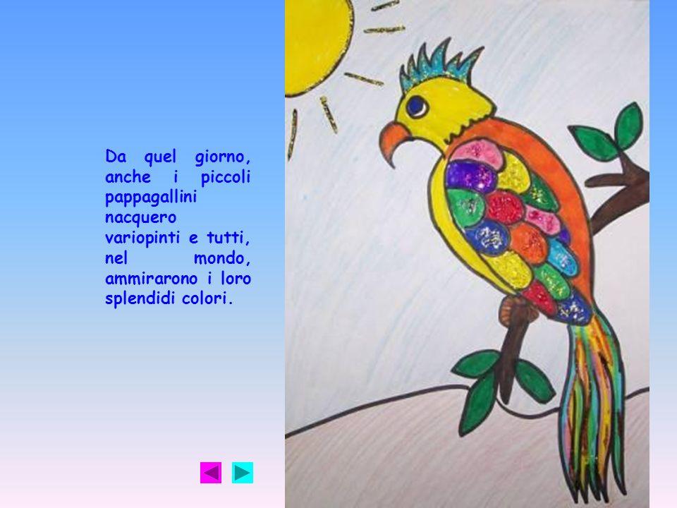 Da quel giorno, anche i piccoli pappagallini nacquero variopinti e tutti, nel mondo, ammirarono i loro splendidi colori.