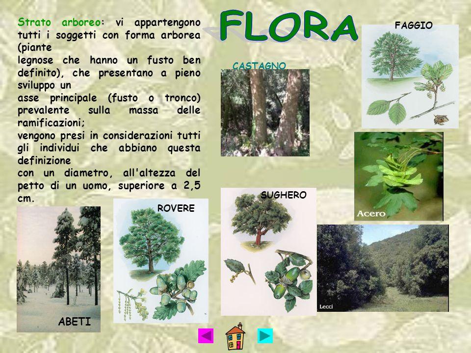 FLORA Strato arboreo: vi appartengono tutti i soggetti con forma arborea (piante.