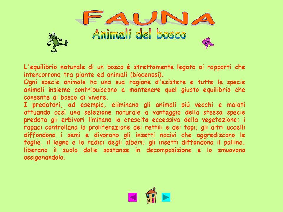 FAUNA Animali del bosco