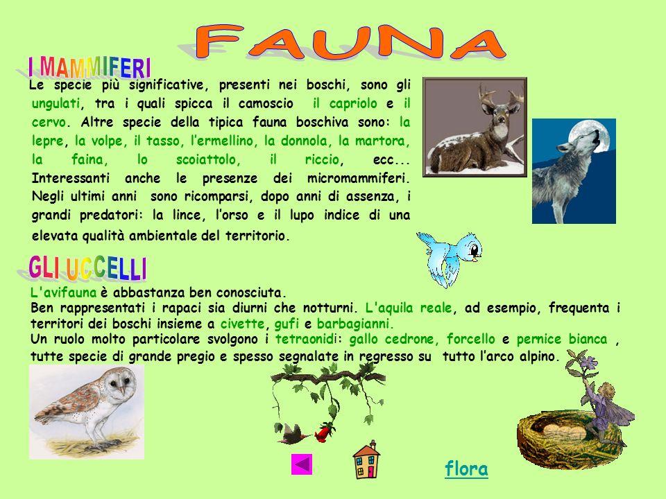 FAUNA flora I MAMMIFERI GLI UCCELLI