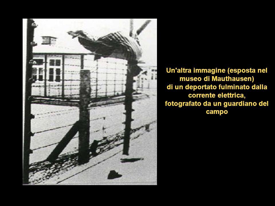 Un altra immagine (esposta nel museo di Mauthausen) di un deportato fulminato dalla corrente elettrica, fotografato da un guardiano del campo