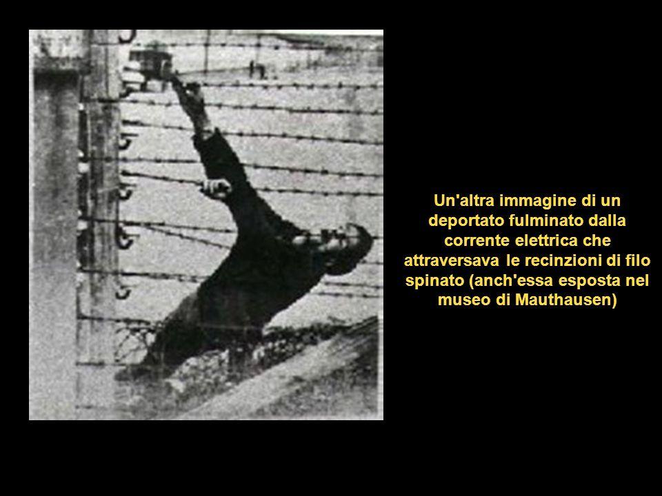 Un altra immagine di un deportato fulminato dalla corrente elettrica che attraversava le recinzioni di filo spinato (anch essa esposta nel museo di Mauthausen)