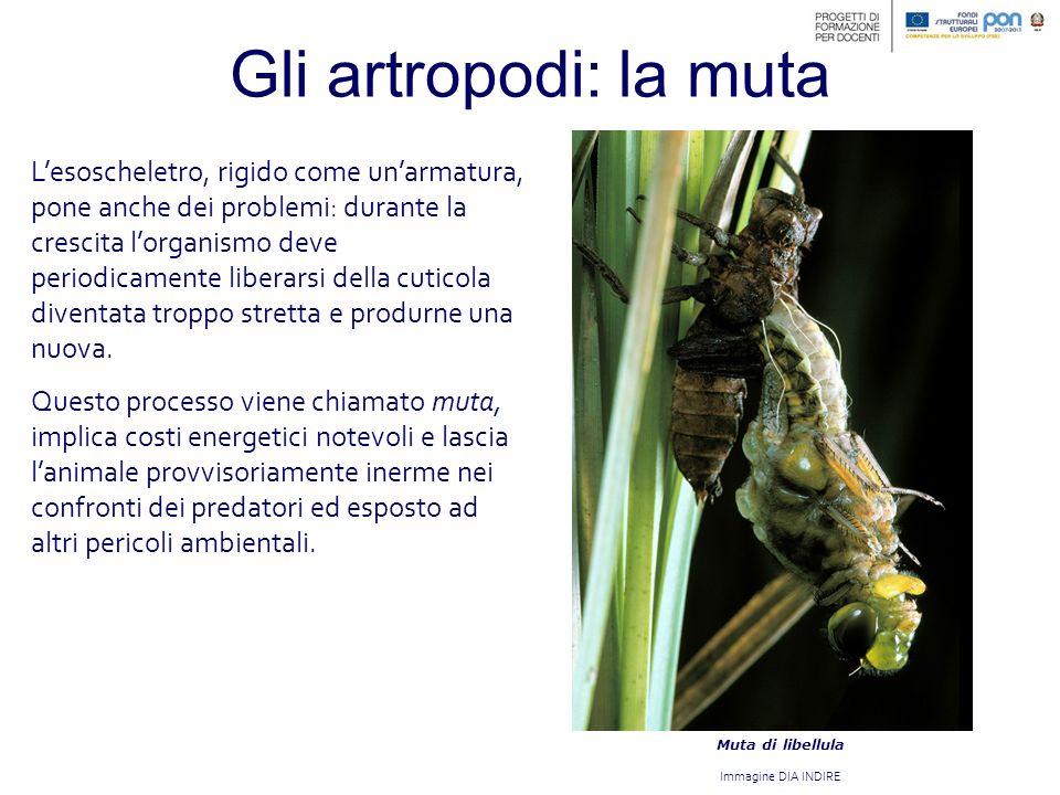 Gli artropodi: la muta
