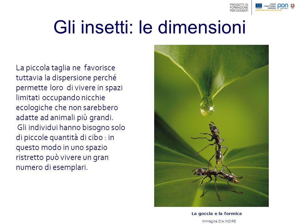 Gli insetti: le dimensioni