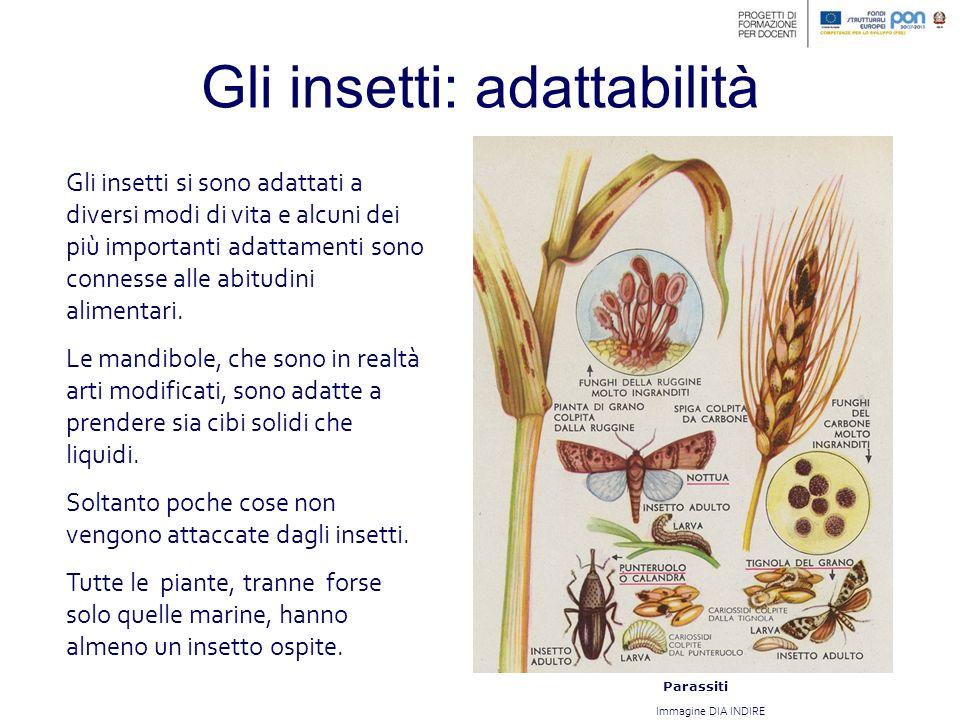 Gli insetti: adattabilità