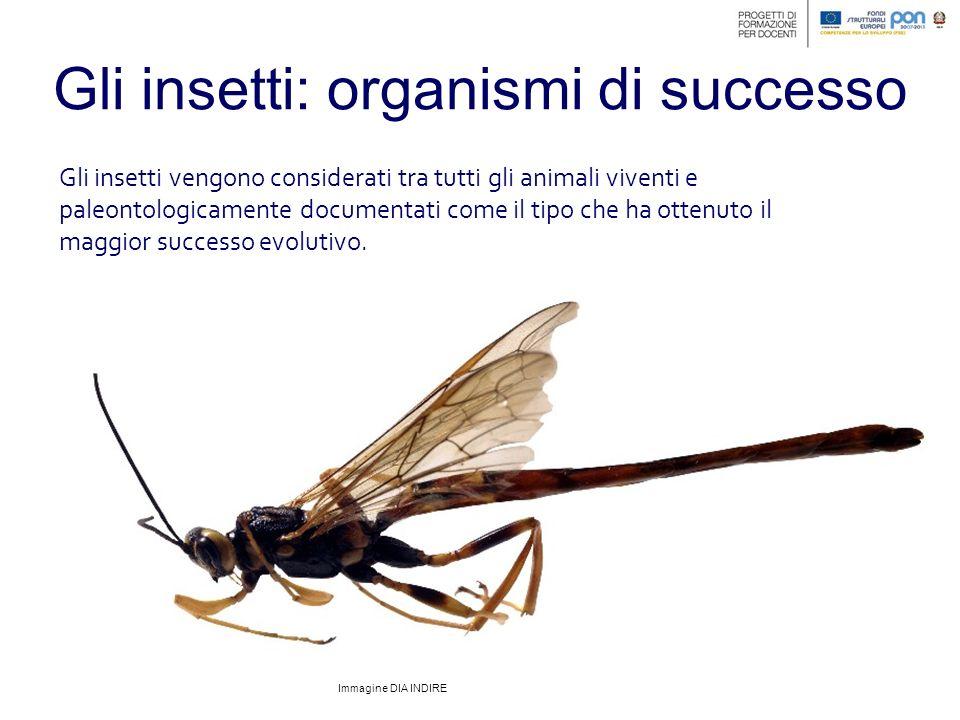 Gli insetti: organismi di successo